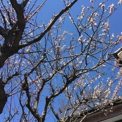 花粉症の季節   野良は増えないで欲しい