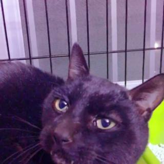 抱っこ好きな黒猫くん♂