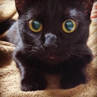 甘えん坊の黒猫 女の子
