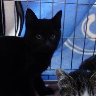 美人な黒猫のマイちゃん  ビビリさんです
