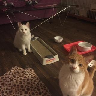 白猫と茶白兄弟1歳