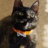 賢いさび猫さんです♪ サムネイル2