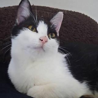 シュッと美猫のウランちゃん…4ヶ月