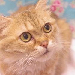 猫の里親会 サムネイル3