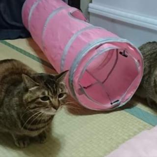かわいい猫の双子〜
