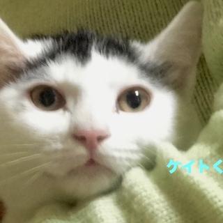 生後4ヶ月子猫たちオスメス