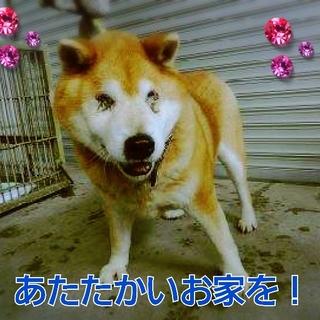 若くはありませんが鳥取近郊の方お願いします!