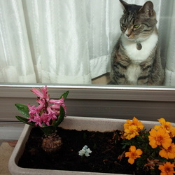 お花が咲いたよ!