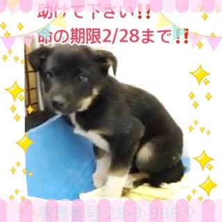 期限:2/28 子犬ちゃんを救ってください。