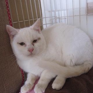動画あり 甘えん坊の白猫熊本っ子 スケキヨ君