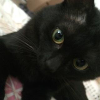 優しくて寂しがりやの黒猫ちゃん
