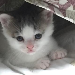 1月10日生まれのメス猫です人懐こい子猫です