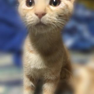 可愛い子猫オス2匹
