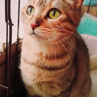 お庭猫、シャネルの家族になってください!