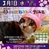 夜の猫の譲渡会(NPO法人ニャン友ねっとわーく北海道)