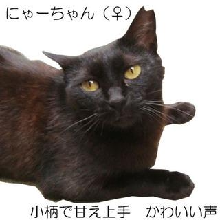 かわいい声で甘えてくれる小柄な黒猫の女の子