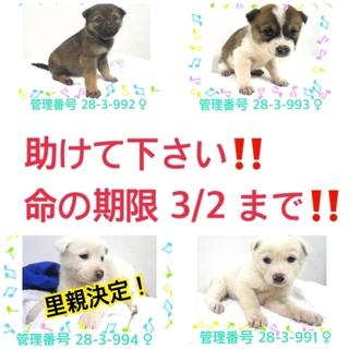 可愛い四姉妹の子犬たちです!!