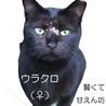 賢く甘えん坊 マイペースな黒猫の女の子