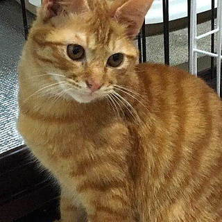猫も人も大好き:捨て猫小太郎くん5ヶ月