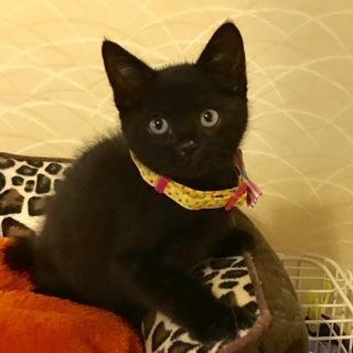 推定2ヶ月!可愛い黒子猫 聖(セイ)くん