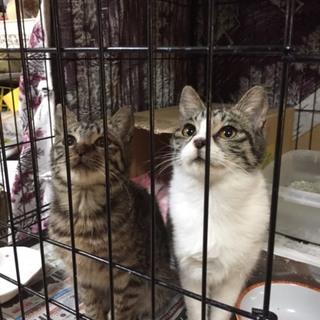 生後半年になったらもう1度検査する子猫2匹