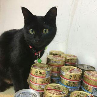 ユニークな黒猫ドラミちゃん