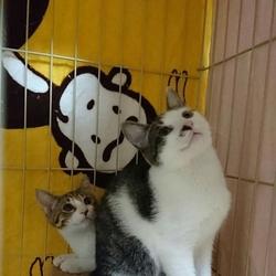 枚方市西船橋の動物病院にて猫の里親会