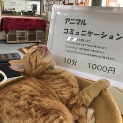 アニマルコミニケーション&マヤ暦