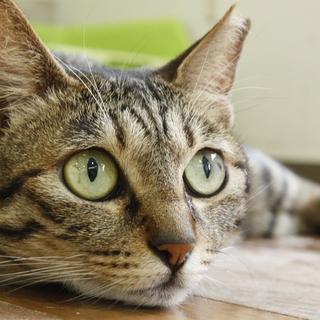保護猫カフェ「チョビ」