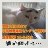 【保健所収容中・命の期限3月8日】誰か助けて!