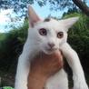 ベタ慣れのぽっちゃり子猫の男の子♪ サムネイル3