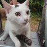 ベタ慣れのぽっちゃり子猫の男の子♪ サムネイル4