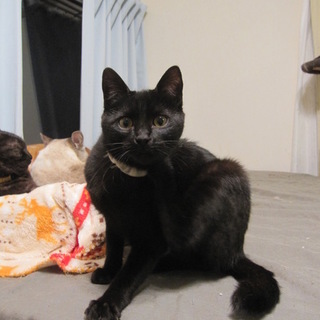 動画あり 人懐こい黒猫熊本っこみかちゃん