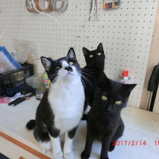 黒猫と白黒の2兄弟