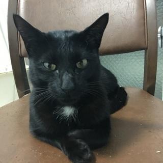 人懐こい黒猫ちゃん 推定1歳