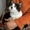 里親募集【子猫の家族になってください】 サムネイル2