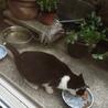 里親募集【子猫の家族になってください】 サムネイル5