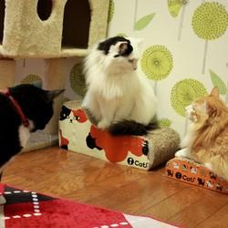 ワークショップ「猫モチーフアイシングクッキー教室」 サムネイル2