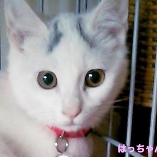 眉毛猫のはっちゃんは猫が好き