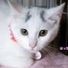 眉毛猫のはっちゃんは猫が好き サムネイル2
