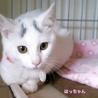 眉毛猫のはっちゃんは猫が好き サムネイル3