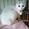 眉毛猫のはっちゃんは猫が好き サムネイル4