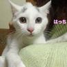 眉毛猫のはっちゃんは猫が好き サムネイル6