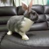 子ウサギの里親再募集