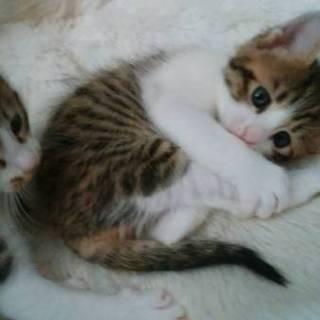 4匹います♪生後1ヶ月半の子猫ちゃん