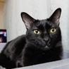 多頭飼い崩壊現場から保護ツンデレ黒猫ちゃん里親決定 サムネイル3
