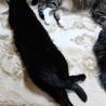 多頭飼い崩壊現場から保護ツンデレ黒猫ちゃん里親決定 サムネイル7