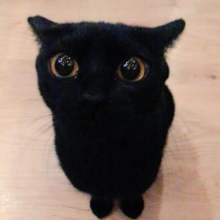 一旦募集停止★実写版ジジ?ツヤツヤ黒猫ちゃん