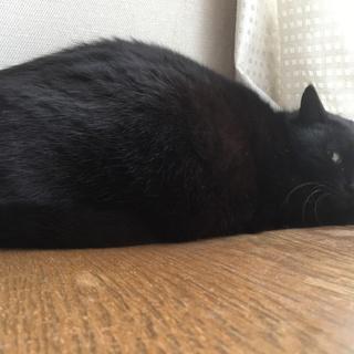 黒猫お母さん