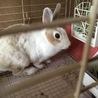 1歳♀ミニウサギ